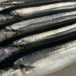 北海道産生秋刀魚